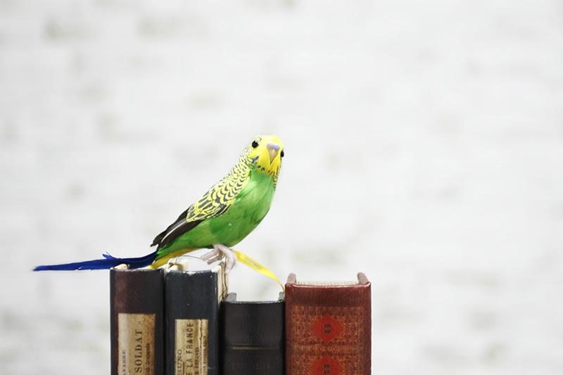 puebco プエブコ artifical birds budgie セキセイインコオブジェot定番